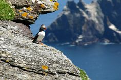 Photo about Ireland puffin enjoying the view from skellig island, ring of kerry. Image of colorful, ireland, honk - 10635788 Southern Ireland, Clare Ireland, County Clare, Irish Culture, Cliffs Of Moher, Ireland Travel, Day Tours, World Heritage Sites, Cool Places To Visit