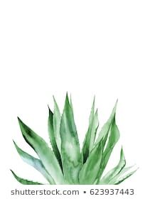 size: Stretched Canvas Print: Agave I by Ann Solo : Subjects Using advanced technology, we print the image directly onto canvas, stretch it onto support bars, and finish it with hand-painted edges and a protective coating. Watercolor Plants, Watercolor Leaves, Watercolor Illustration, Watercolour Painting, Watercolor Artists, Painting Abstract, Watercolors, Plant Painting, Plant Art
