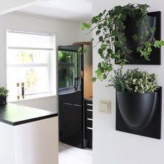 #Vertiplants #verticalindoorgardening #vertical #indoor #gardening #www.vertiplants.dk #urban gardening #verticalgarden #vertical gardening #urbanjungle