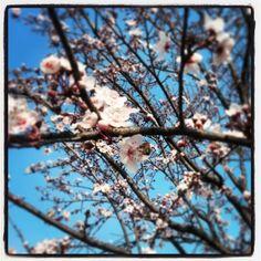 #flower #power #flowerpower #nature #instanature #instamoment #bees #trees #pruno #novellaorchidea #novella #orchidea #raccontierotici #racconti #ebook #ricardo #tronconi #eroticnovel #skyporn #cloudporn #focus #ramo #orizzontale