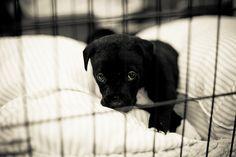 My Foster Puppy, meet him here--> www.vickijune.com