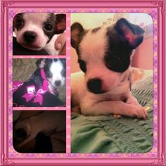 My Forever Baby Chanel Seriously, what is cuter than this?? I dare u to find one thing that can't beat that face lol. Ok, maybe I'm a little partial but I still think I'm right lol CHANEL Other