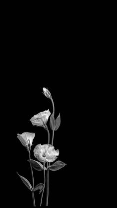 Dark Background Wallpaper, Phone Wallpaper Images, Flower Phone Wallpaper, Iphone Background Wallpaper, Black Wallpaper, Galaxy Wallpaper, Black Background Images, Black Aesthetic Wallpaper, Aesthetic Iphone Wallpaper