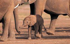 Olifanten-achtergronden-dieren-hd-olifanten-wallpapers-9.jpg 1.600×1.000 pixels