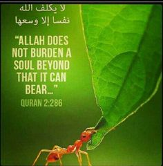 """The Prophet (pbuh) said:""""Allah (subhanahu wa taala) will ask every caretaker about the people under his care, & the man will be asked about the people of his household."""""""