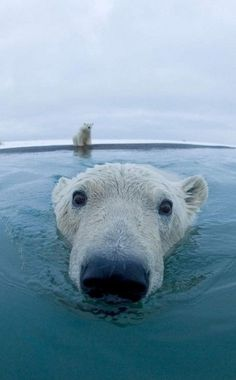eye to eye with a polar bear