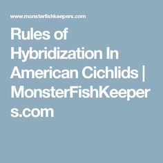 Rules of Hybridization In American Cichlids | MonsterFishKeepers.com