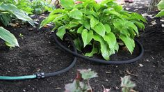 Snip-n-Drip Soaker System: Our original Snip-n-Drip is ideal for watering several garden beds or your foundation plantings. It includes of soaker… Watering Raised Garden Beds, Garden Watering System, Raised Beds, Water Plants, Water Garden, Garden Irrigation System, Irrigation Systems, Rain Barrel System, Automatic Watering System