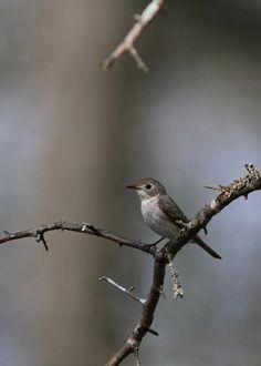 Tiny Bird, Animals, Nice Asses, Animales, Animaux, Animal, Animais