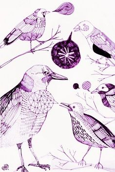 Birds  heliographics