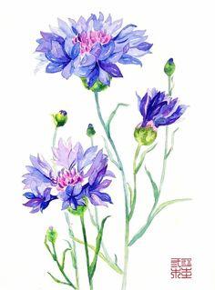 福根儿的相册-花 卉 の 水 彩