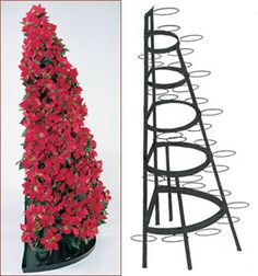 A single Half Round Tree fits perfectly against a wall. Two Half Round Trees can be placed back to back to create a full tree.Use year round.Stores flat for easy storage.Made of powder coated steel in the USA. Tomato Cage Crafts, Poinsettia Tree, Old Time Christmas, Christmas Ideas, Merry Christmas, Dollar Tree Fall, Christmas Tree Inspiration, Holiday Crafts, Holiday Decor