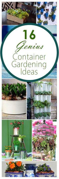Container garden, gardening hacks, container gardening tricks, gardening tricks, popular pin, gardening 101, gardening ideas, small space gardening, flowers for container gardening, patio ideas