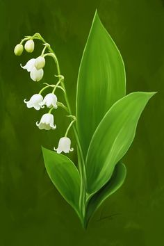 Lily of the valley Exotic Flowers, Wild Flowers, Beautiful Flowers, Flower Images, Flower Art, Botanical Prints, Botanical Flowers, Lily Of The Valley Flowers, Fotografia Macro