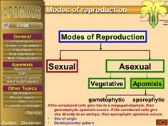 EEEENNNNDDDD SSSSHHHHOOOOWWWW  AAppoommiixxiiss  Apomixis • 300 species  • 35 families.  •Development of embryo without  E...