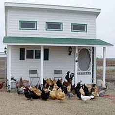 7 ways to make your coop great | Living the Country Life http://www.livingthecountrylife.com/animals/poultry/7-ways-to-make-your-coop-great/