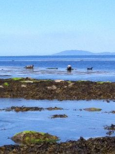 Seals on the Arran Islands , Ireland