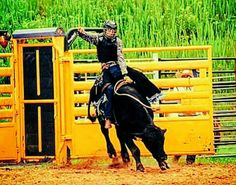 Rodeo Bull Riding Picture sent by Rider Noah Smith @smith_noah11 South Carolina https://www.instagram.com/smith_noah11/ Team Cowboy Coffee Chew #rodeo #bullriding #cowboys
