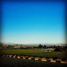 Life is too short to drink bad wine SNAP: livedreamwander #travel #instatravel #travelstoke #traveller #travellife #travelgram #instatravelling #travelblogger #wanderlust  #beautifuldestinations #traveldeeper #photooftheday #passionpassport #tour #fun  #travelawesome #digitalnomad  #livedreamwander #wine #sonomapassion #california #winetasting #napavalley #sonomacounty #vineyards Sonoma County, Digital Nomad, Life Is Short, Napa Valley, Wine Tasting, Vineyard, Wanderlust, California, Tours