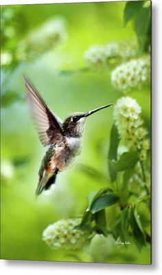 Peaceful Love Hummingbird Metal Print by Christina Rollo. All metal prints are…