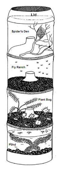 Esperimenti scientifici per bambini - Micro ecosistema in bottiglia 1