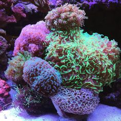 33 Aquarium with Beautiful Coral Reef - meowlogy Coral Reef Aquarium, Saltwater Aquarium Fish, Tropical Fish Aquarium, Saltwater Tank, Marine Aquarium, Marine Fish Tanks, Marine Tank, Aquarium Accessories, Coral Garden