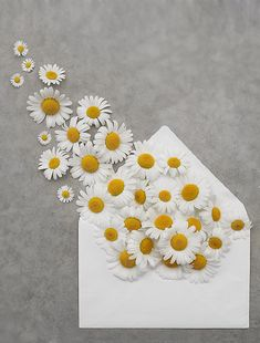 yellow and white Dreamy Photography, Book Photography, Creative Photography, Flowery Wallpaper, Colorful Wallpaper, My Flower, Flower Art, Daisy Party, Daisy Love