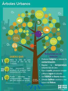 Beneficios de plantar un árbol