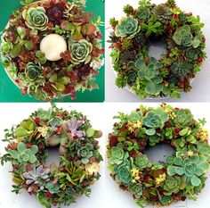 Living Succulent Wreaths