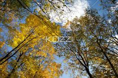 low angle view of autumn trees. - Low angle view of autumn trees against sky.