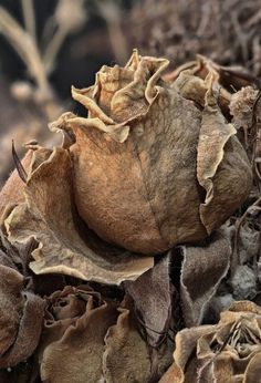 Growth And Decay, Cinnamon Tea, Brown Aesthetic, Seed Pods, Natural Forms, Earth Tones, Dried Flowers, Wilted Flowers, Autumn Leaves