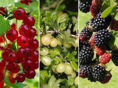 A gyümölcsöskerteknek kedves és kedvelt növényei a gyümölcstermő cserjék. Ezek is igénylik a rendszeres felügyeleti metszést. Forest Landscape, Permaculture, Garden Planning, Blackberry, Berries, Fruit, Outdoor, Gardening, Minden