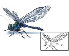 Show details for Dragonfly Tattoo ACF-00285