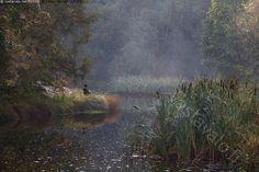 Ongella - joki Vantaanjoki joenpenkka ranta syksy syksyinen osmankäämi rantaheinikko onkia ongella ihminen usva usvainen sumu aamusumu aamu-usva maisema luonto