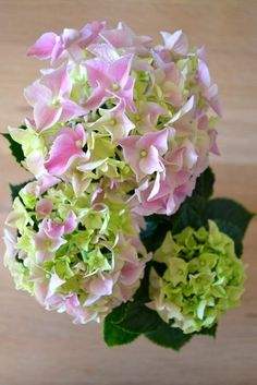 Miris Jahrbuch: Besser spät als nie: Hortensien (im Milchkännchen) für #2flowergirls