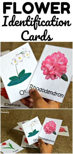 Use these printable flower identification flashcards to help students learn to name common flowers in their neighborhoods! Preschool Science Activities, Spring Activities, Fun Activities For Kids, Crafts For Kids, Student Learning, Kids Learning, Early Learning, Homeschool Kindergarten, Homeschooling Resources