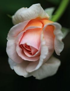 http://www.tokobungafresia.com/p/toko-bunga-fresia-florist-menjual-bunga_15.html