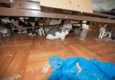 A big-hearted Bronx man, who was struggling with lymphoma, watched helplessly as the 15 felines he rescued more than a year ago multiplied into a clowder of 75 cats. They've all been saved by the ASPCA.