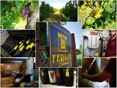 Wine Blog Roll - Il Blog del Vino italiano: Cantina Silvano Ferlat - Un padre, un figlio, l'eq...