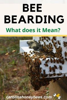 Hives And Honey, Honey Bees, Hive Heating, Beard Shapes, Beekeeping For Beginners, Bee Swarm, Bee Do, Backyard Beekeeping, Rainwater Harvesting