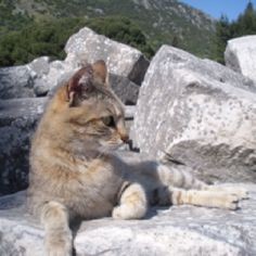 Cat at the ruins in Ephesus, Turkey