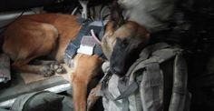 "PLEASE READ!! Four Legs and a LIFE of Service: the FIGHT to ALLOW Military Working Dogs to ""retire"" on U.S. Soil - Americans should know that our Military Dogs faithfully protect & serve our country while deployed overseas. When the dogs serve a deployment overseas AND is technically ""retired"" they are automatically LEFT in shelters in the foreign country! We need to TELL Congress to CHANGE this so these dogs can RETURN BACK to the US either to their original handlers or a loving adoptive home!"