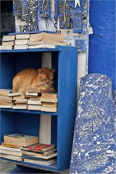 The book, your best friend. Asillah. Morocco by zanzibarcordoba on Flickr.