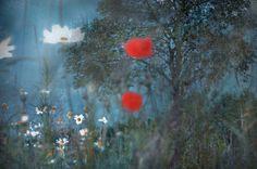 Tomek Sikora, Z cyklu Nostalgia, wydruk Lambda, zabezpieczony folią UV, 66 x 100 cm