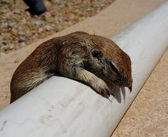 Rick Gruber était au travail quand il a repêcher ce petit écureuil qui ne savait pas nager.