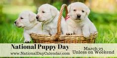 NATIONAL PUPPY DAY Observed each year on March is National Puppy Day. National Puppy Day will be celebrated on the Friday or Monday closest to March if that day falls on a weekend. National Puppy Day, National Days, National Holidays, National History Day, New Puppy Checklist, National Day Calendar, Puppy Supplies, Dog Clothes Patterns, Sewing Patterns