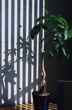 plants in benesse house, naoshima