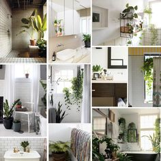 Plants in the Home: Bathroom | The Sill - New York Houseplant Delivery & Plant Design Services  In my future dream house, I shall have plants in my bathroom. And the bathroom will have it's own window.  #plants #bathroom #greenery