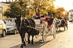A horse and carriage ride around Cape May is fun in the fall and winter! Cape May Point, Ocean City, Jersey Cape, Cape May County, New Jersey