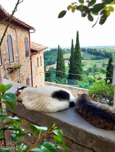 """Yes, we know, we are well fed."" -- Discovering Italy: The Hill Towns on A SpicyPerspective.com Volterra province of Pisa Tuscany"